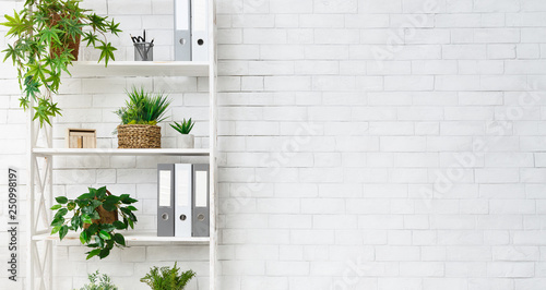 Office bookcase with plants and folders over wall Wallpaper Mural