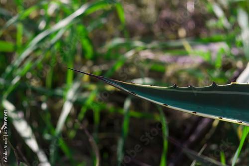 Fotografie, Obraz  spina gigante