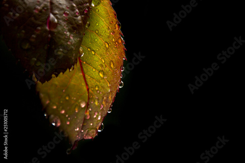 Natura dell'Appennino Ligure (Varazze, Piana Crixia) Slika na platnu