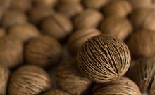 Pong Pong Seed. Cerbera Odollam Fruit. Othalanga - Suicide Tree