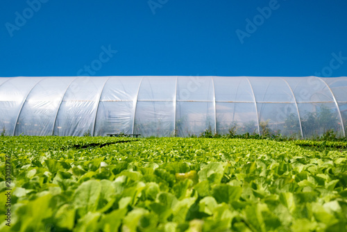 Fotografia green plant layers on greenhouse background