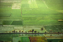 Aerial View Of Rice Fields, Indonesia