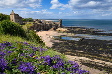 St Andrews Castle Ruins On Rocky North Sea Coast Overlooking Castle Sands Beach In St Andrews Fife Scotland UK With Purple Geraniums