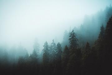 Mgła w czarnym lesie