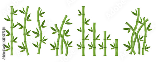 Slika na platnu Green bamboo branches and leaves. Vector illustration.