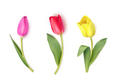 Fototapeta Tulipany - Set of colorful tulips isolated on white. Spring flowers. Vector illustration