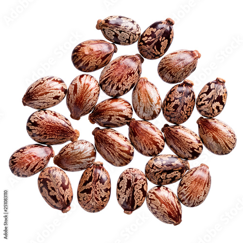 A Heap Of Quality Seeds Of Ricinus Communis Flower For Your Adorable Garden Can Be Used For Create New Stylish Packaging With Seeds On Background Buy This Stock Photo And Explore