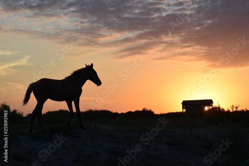 Poster Afrique du Sud horse at sunset