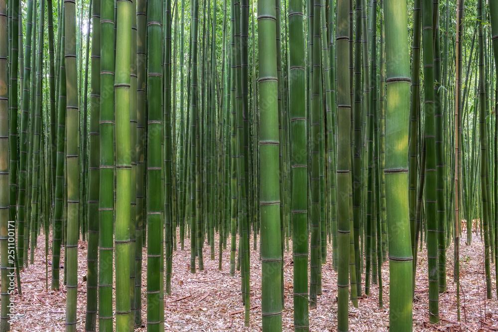 Taehwagang park Simnidaebat bamboo forest
