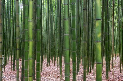 Spoed Foto op Canvas Bamboo Taehwagang park Simnidaebat bamboo forest