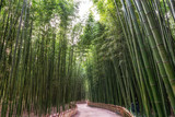 Fototapeta Bambus - Simnidaebat bamboo forest path