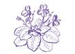 Violet01v