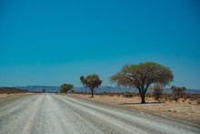 Trees Line Gravel Road In Namibia
