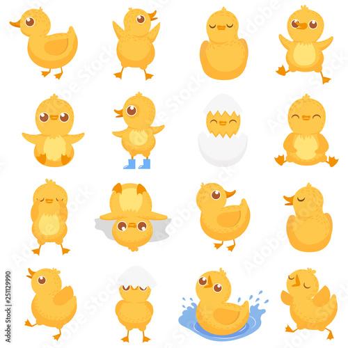 Photo Yellow duckling