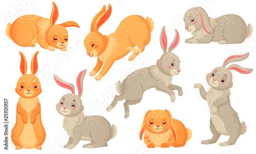 Fotografía Cartoon bunny