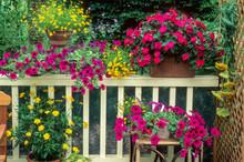 Plantes Annuelles Sur Balcon