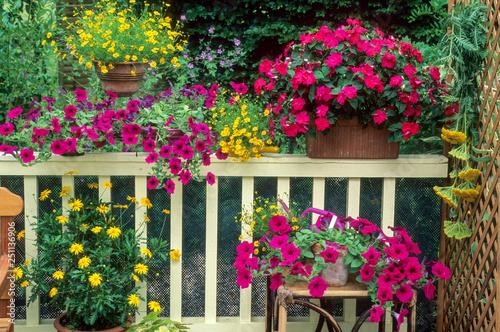 Plantes annuelles sur balcon Wallpaper Mural