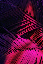 Photo Of Palm Leaves In Neon L...