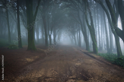 Foto op Aluminium Begraafplaats Path in a forest covered with mist. Arched tree branches
