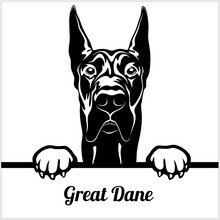 Great Dane - Peeking Dogs - - ...