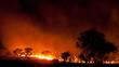 Leinwanddruck Bild - bushfire in grassland with trees in australia