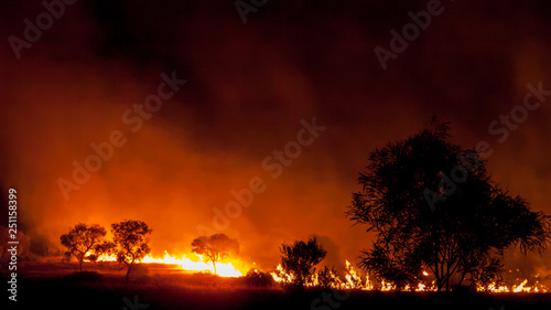 Foto bushfire in grassland with trees in australia