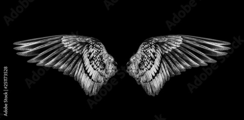 Foto  Wings of birds isolated on black background