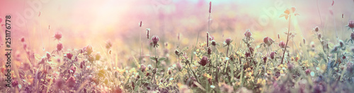 Foto op Plexiglas Weide, Moeras Selective and soft focus on flowering red clover, beautiful meadow, flowering meadow flowers
