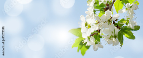 Fotobehang Bomen Apple blossom spring tree