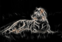 Lying Tiger In Fractaled Structure On Black Background.