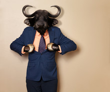 Male Wildebeest In Office Clot...