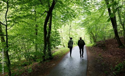 Wandern,Wald,Buchenwald,Frühling