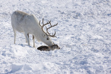 Childbirth In The Tundra Of Sw...