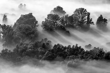Alba sulla foresta con nebbia, immagine in bianco e nero