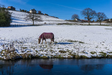 Cold Horse By The Peak Forest Canal On A Cold January Sunday In Marple