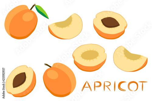 Valokuvatapetti Illustration on theme big set different types round apricot