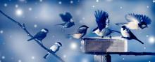 Birds In Winter Time