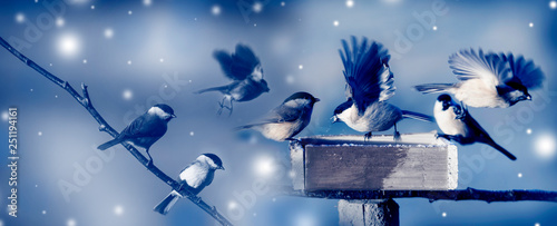 Foto op Aluminium Schilderingen birds in winter time