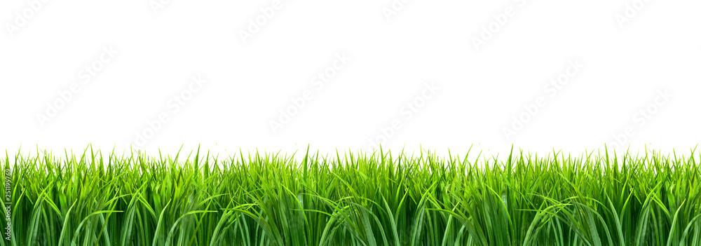 Fototapeta Trawa panorama z białym tłem