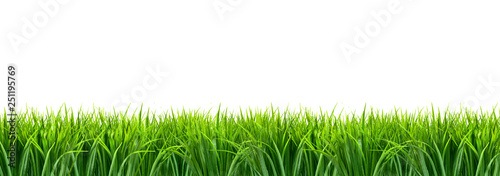 Fototapeta Trawa panorama z białym tłem obraz