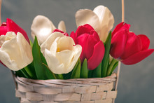Tulips Buds In Basket Close Up...