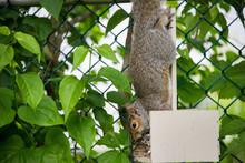 Squirrel Hanging Upside Down I...