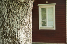 Big Tree Trunk On Red Wooden H...