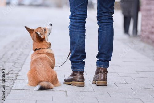 Puppy dog training on a street: dog sitting smart next to the owner