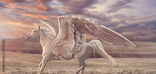 Fotografia Rosy Sunset Pegasus