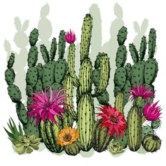 Naklejka Egzotyczne Green succulents and cactus plants with flowers. Hand drawn vector on white background.