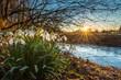 canvas print picture - Schneeglöckchen am Bachufer der Einbecker Ilme leuchten im Sonnenuntergang