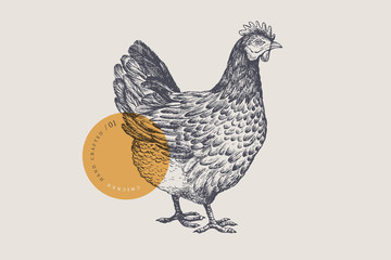 Graphical drawn hen. Hand-drawn retro picture with a poultry in an engraving style. Can be used for menu restaurants, for packaging in markets and shops. Vector vintage illustrations.