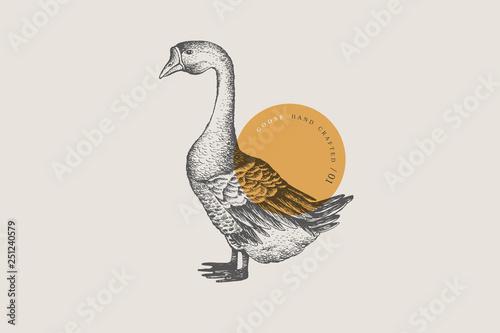 Retro engraving goose Fototapeta