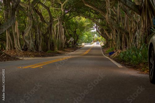 Banyan Tree Road Stuart Florida Martin County Canvas Print